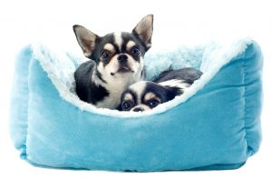 Eco Friendly Dog Beds